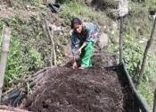 organic vegetable farming improves familys finances
